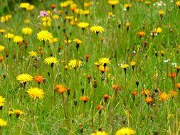 picture of the lots of the yellow wildflowers