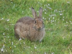 wild rabbit animal nature