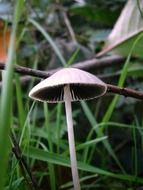 grey mushrooms in the grass