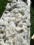 raw wool pure new sheep s