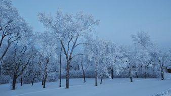 beautiful snow covered trees in winter