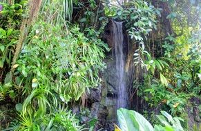 climatron is a tropical botanical garden in the state of Missouri