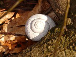 Land snail in forest