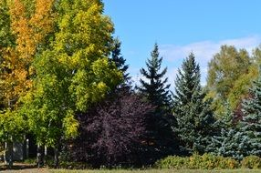 autumn forest fall colorful trees
