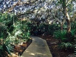 narrow path between tropical trees