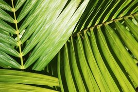 bright green palm leaves closeup
