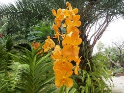 yellow orchids in a tropical garden