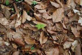 green sprout in old tree leaves
