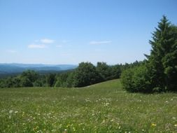 mountain meadow with green grass