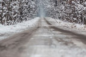 snow-covered asphalt road in the winter forest