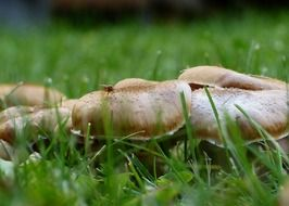 group of mushrooms in grass