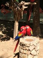 tropical parrots couple portrait
