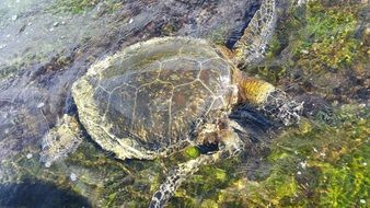 Picture of turtle in a water