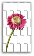 red gerbera as puzzles