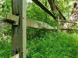 wooden fence in summer