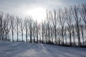 winter landscape on a background of trees