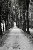 trees alley in black and white