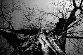 black and white pic of a tree