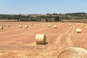 hay bales on the agricultural field