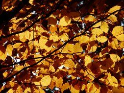 glare of sunlight through autumn leaves of the tree