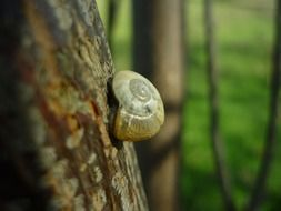 snail on a tree trunk closeup