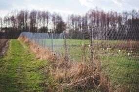 overgrown metal fence in countryside
