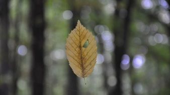 Autumn leaf on a blurred background
