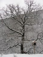tree in the snow in greece