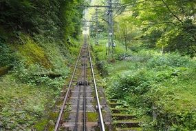 railway among green grass in the thickets of the forest