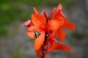Small butterfly on a red flower