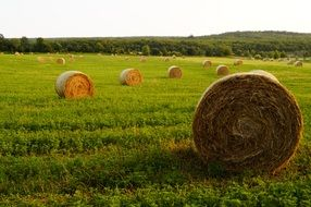 straw bales on the meadow