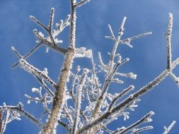 tree branches in hoarfrost