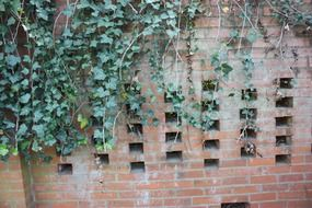 green climbing plant on a brick wall