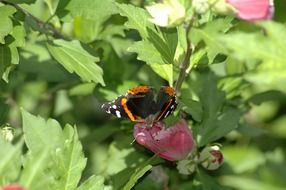 butterfly on a pink flower of a green bush in nature
