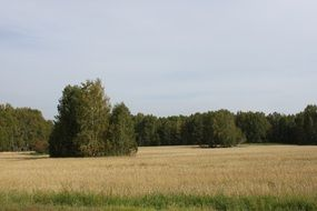 autumn field on a background of green forest