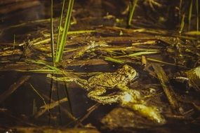 frog water green pond wildlife