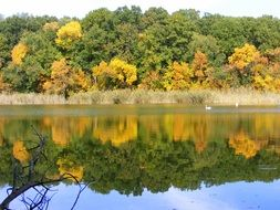 bright autumn forest reflected in the lake on a sunny day
