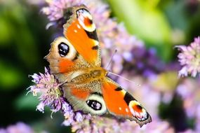 colorful butterfly on flowers closeup