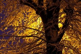 branches in the cold dark
