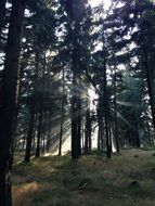 Sun rays penetrates in a forest