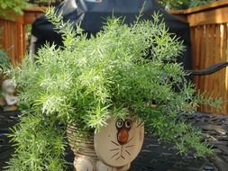 plant in pot with cat face outdoor