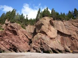 coniferous forest at top of red Hopewell Rocks, canada, Hopewell cap