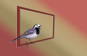white wagtail bird drawing