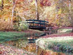 bridge in the autumn forest