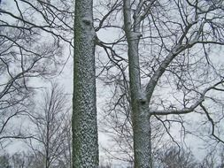 two trees in a snowy forest