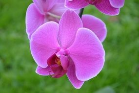 pink orchid flower bloom