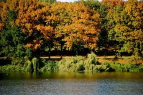 lake with autumn trees view