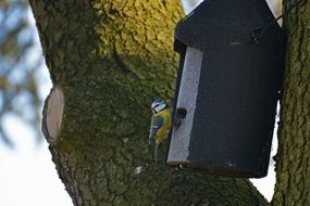 blue tit sits on birdhouse on tree