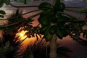 Reunion Island beautiful sunset
