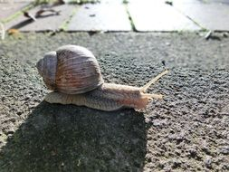 snail is crawling on the road